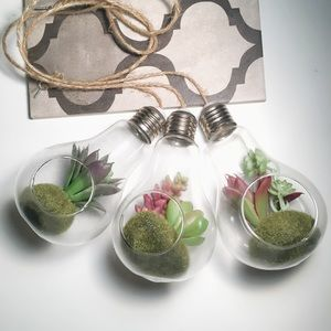 Other - Suspended Succulent Display Bulbs